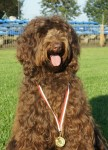 Labradoodles, Gala with medal
