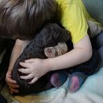 Labradoodle, give me a hug