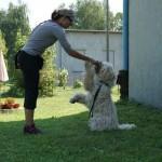 Warsztaty Obedience - Psia Kraina