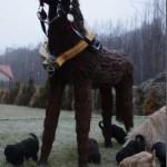 Labradoodle i dziwny kon