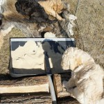 Puppies and educational field