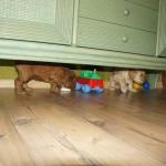 pod szafką