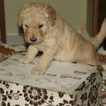 na pudełku