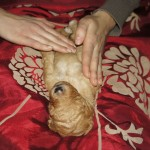 Australian labradoodle puppies and massage