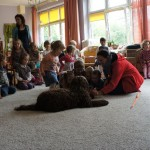 Australijski Labradoodle Gala w przedszkolu