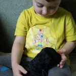 Labradoodle, child socialization