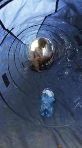 Labradoodle i tunel