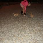 Labradoodle pups at night