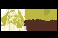 Australijskie Labradoodle