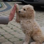 hard five!