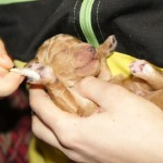 Paws tickled - sensory stimuli